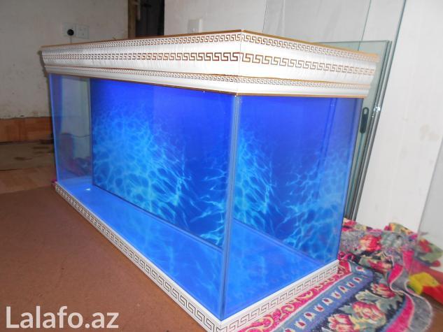 Akvarium sifariwleri qebul olunur versage  . Photo 1
