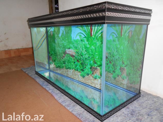 Versage akvariumlarina sifariw qebul olunur) . Photo 0