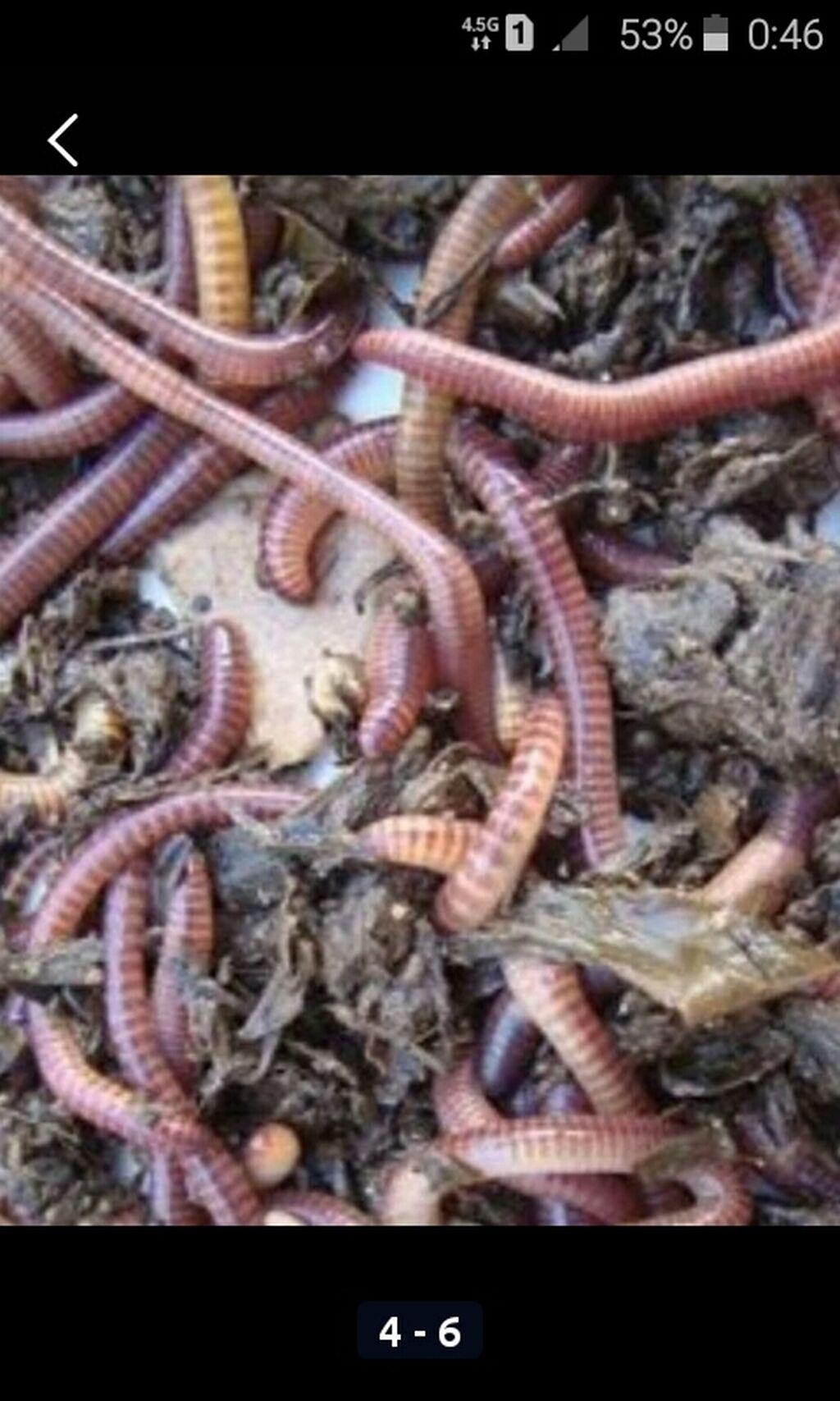 Натуральный (Биогумуз) 100% черви колифорния,