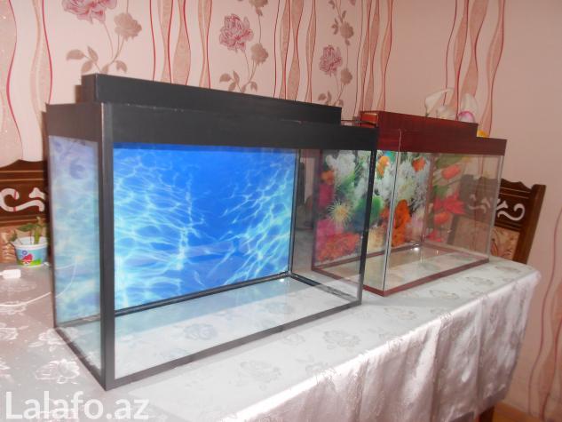 Teze akvarium 60 litre . Photo 1
